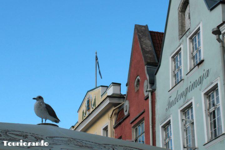 Riga e Tallinn informazioni utili