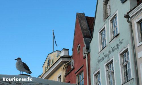 Riga e Tallinn: informazioni utili