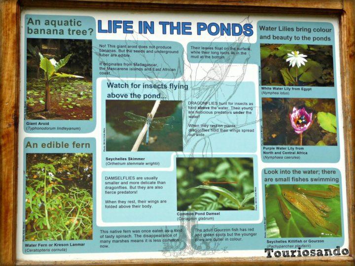 Giardino botanico nazionale di Mahè